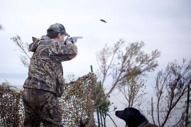 Забраниха лова на пернати заради птичи грип