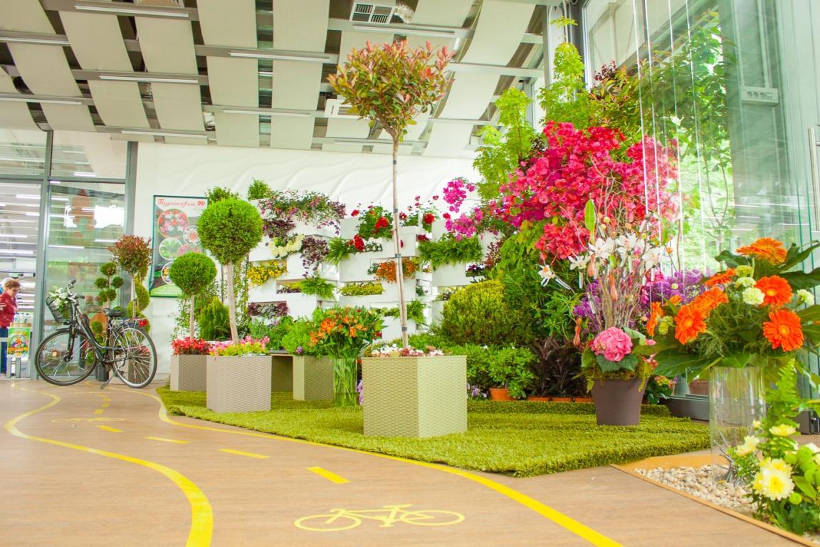 """Екзотично хищно растение от Ботаническата градина в """"София"""" идва в Бургас"""