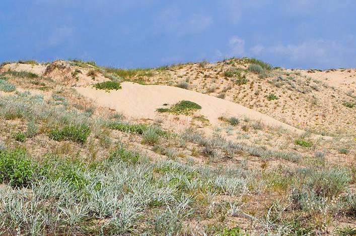 Проверяват Южен и Централен плаж в Слънчев бряг