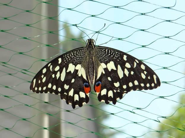 """Екзотичната изложба на живи пеперуди идва за втори път в """"Флората"""""""