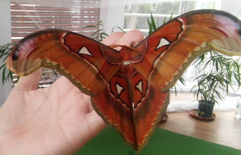 Пеперуда-гигант се излюпи в Бургас