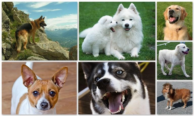 Представят 200 кучета от различни породи в Бургас