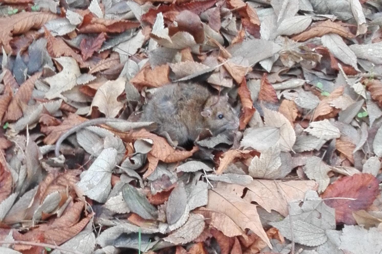 За мишките и хората, не по Стайнбек