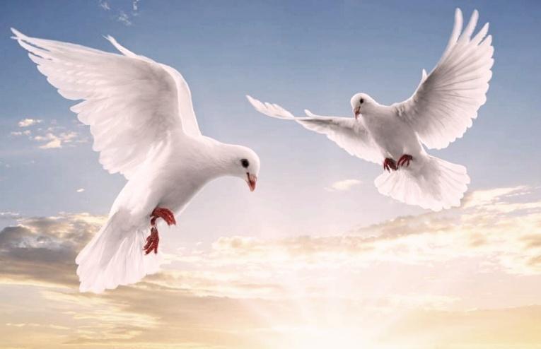 Бели гълъби над Бургас ознаменуват европредседателството на България