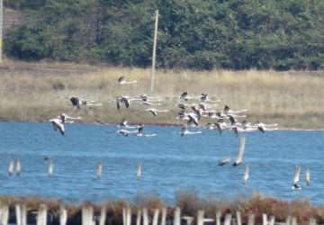 Любителите на птици ще могат да наблюдават обитателите на Атанасовското езеро онлайн