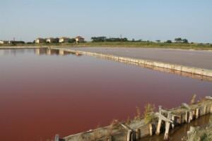 Съветници с апел да се отвори безплатна зона на басейните с луга и кал