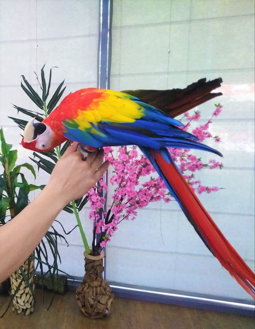Живи изложби на папагали и пеперуди в Бургас