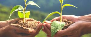 """В Бургас започва кампанията """"Засади дърво"""""""