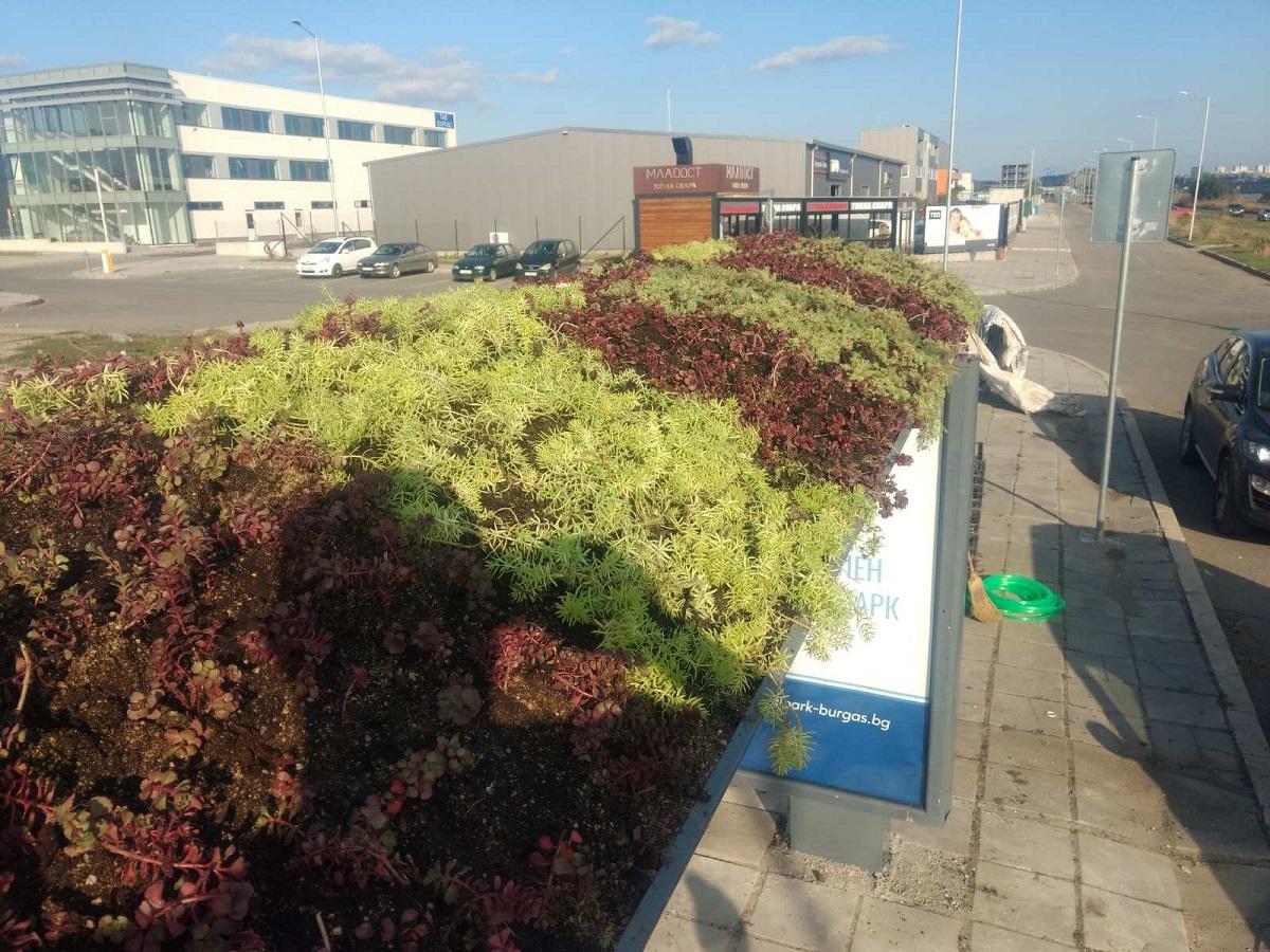 Автобусни спирки, покрити с растения? В Бургас може!