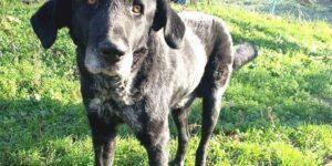 Изумителната история на кучето Бари