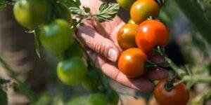 Земеделските стопани избират как да облагат доходите си